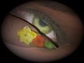 mukorom.hu - Porci virágok